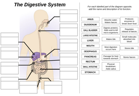 all about the digestive system pdf